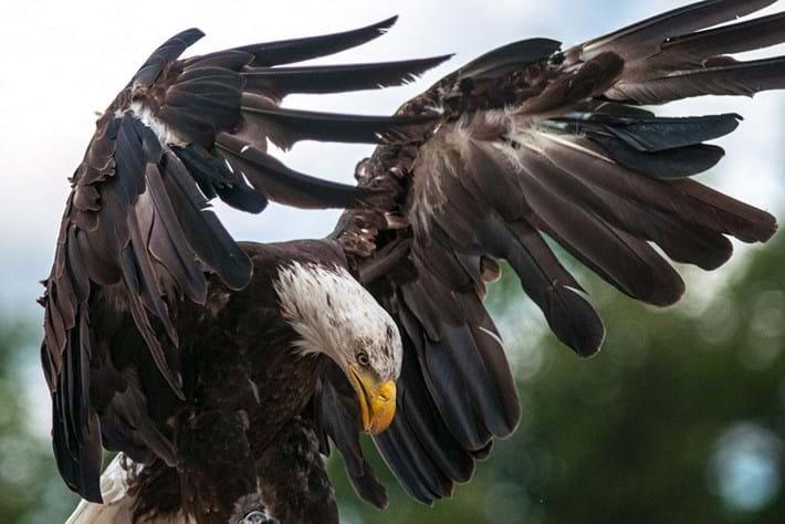 eagle-fed up-2014-7-4