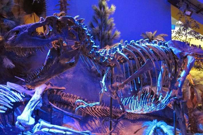 Gorgosaurus Dinosaur 2014 07 08