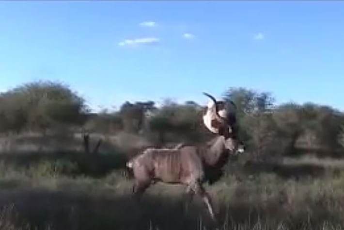 Kudu Soccer Ball 2014 10 07