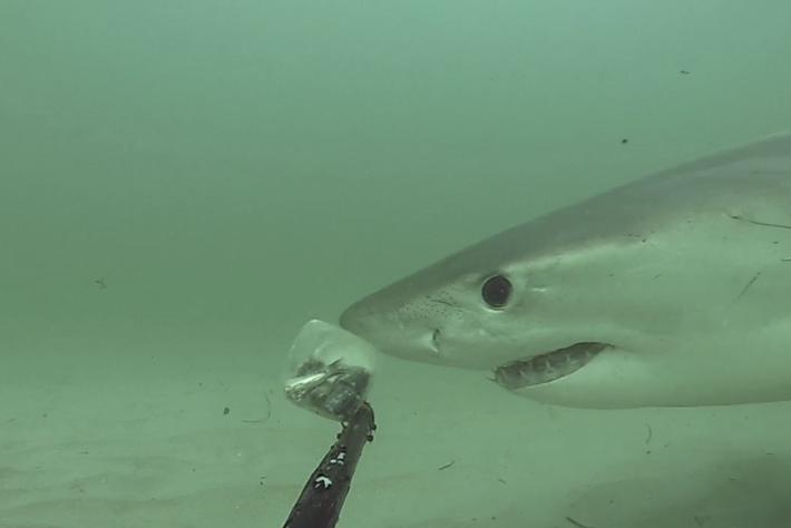 shark bump-page-2014-7-17