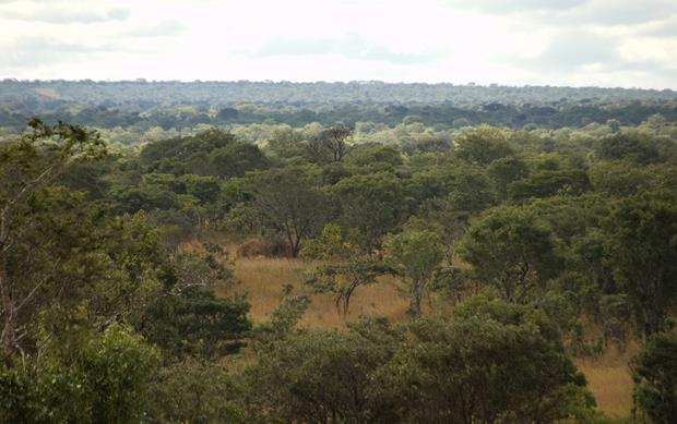 forrests-miombo-2014-7-22