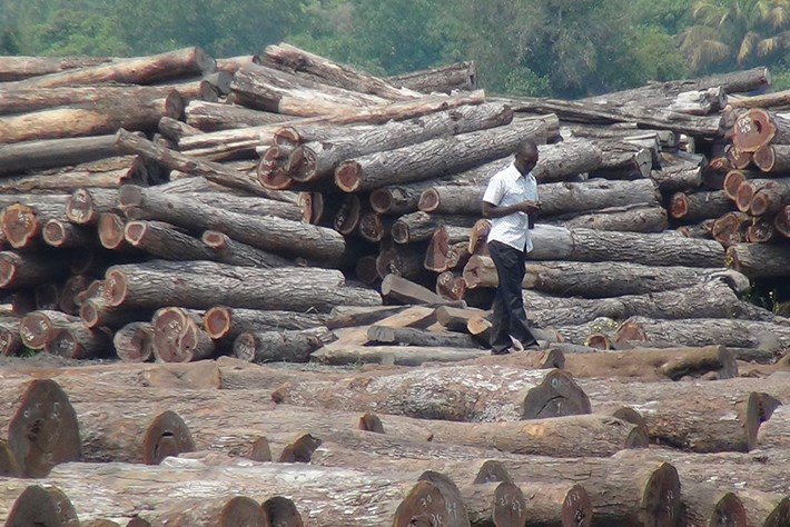 forests-logs-2014-7-22