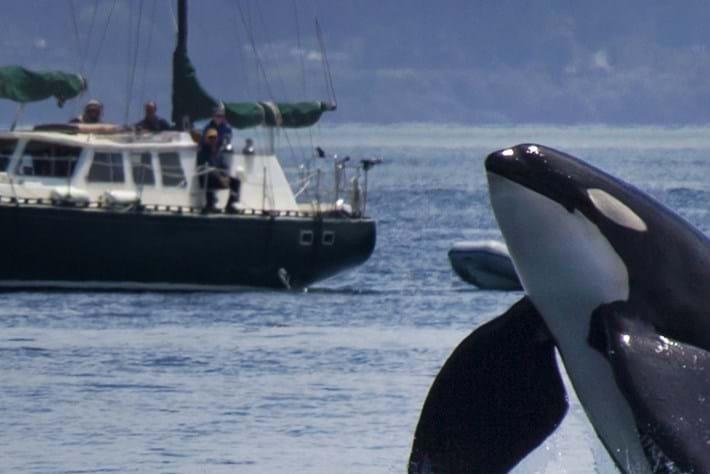 orca bust-2014-7-29