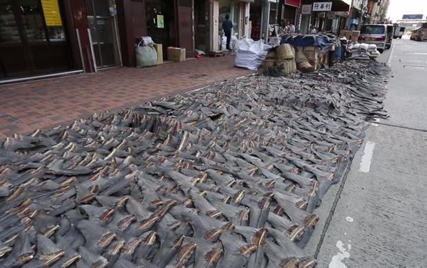 Video: Shark fins in Sheung Wan ... Shocking? Yes. Finning? Not necessarily.