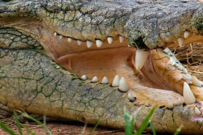 croc-header-2014-8-4