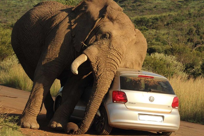 Elephant Car Scratch 2 2014 08 08