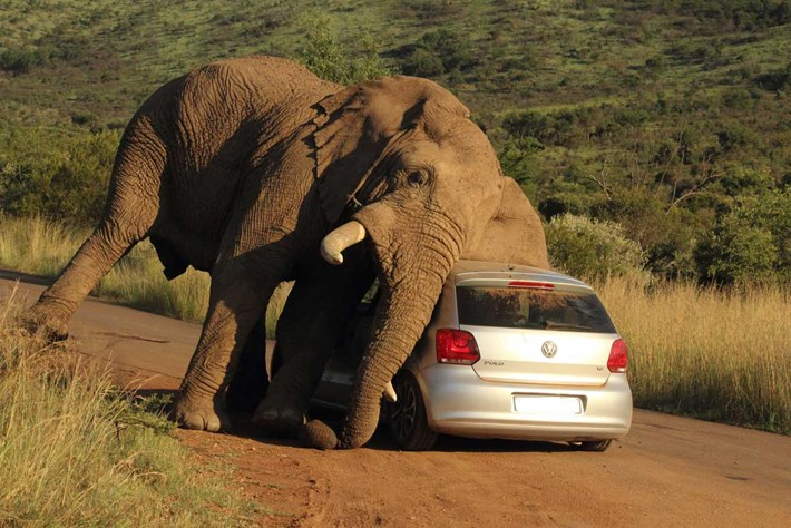 Elephant Car Scratch 3 2014 08 08