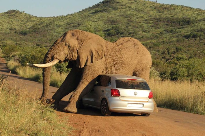 Elephant Car Scratch 4 2014 08 08