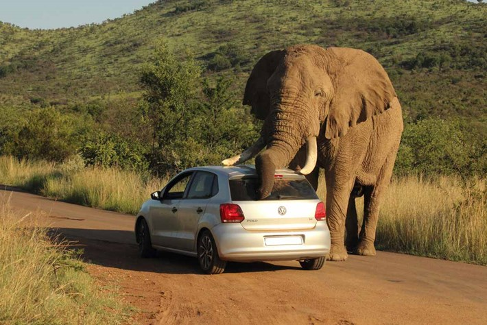 Elephant Car Scratch 2014 08 08