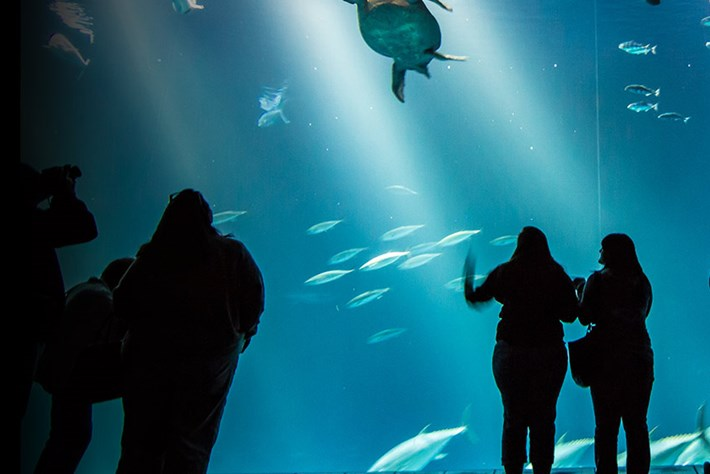Monterey Bay aquarium_2014_08_08