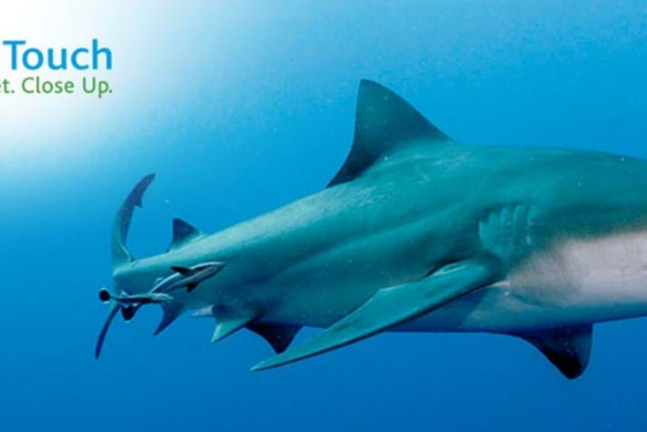 shark week_pageimage_2014_08_12