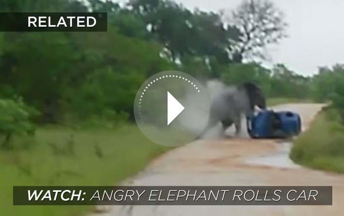 Elephant Rolls Car 2014 08 13