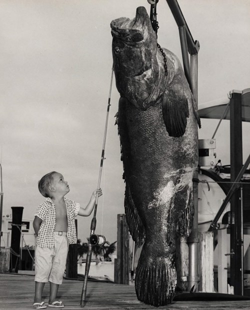 Small changes to trophy fishing could make a big ...