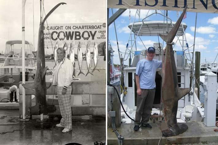 shiffman fish-sharks-2014-8-16