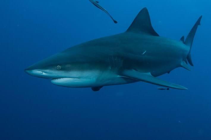 shark_google_page2014_08_15