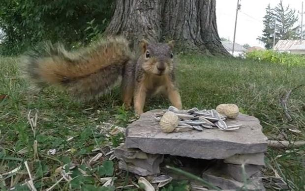 Squirrel gets frisky with GoPro