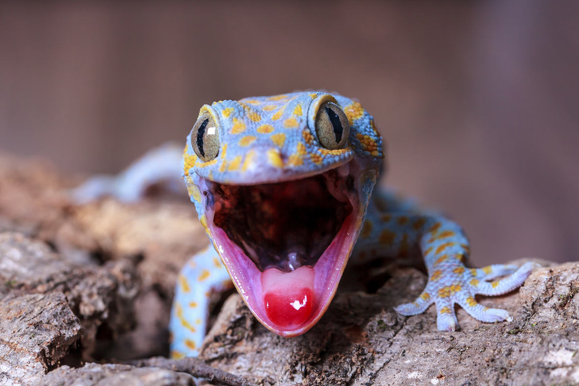 Top 10 Totally Gorgeous Geckos Film And Photo Earth