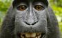 US regulators confirm that nobody owns the monkey selfie