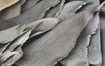 Are New Zealand's new shark finning laws strict enough?