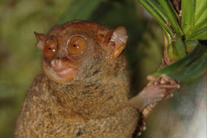 Top 10: New animal species discovered this year