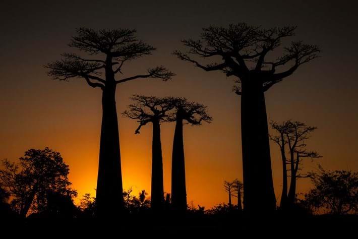 Baobab Tree 2014 09 02