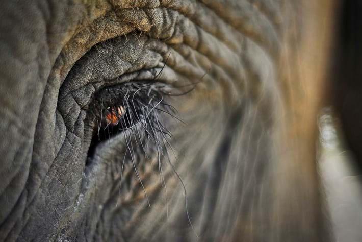 Elephant Eyelashes 2014 09 09