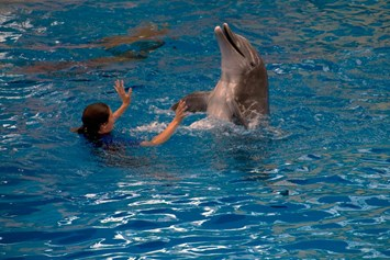 dolphin-page-2014-9-8