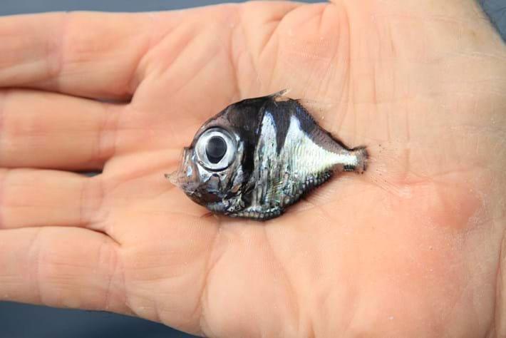 fish-page-2014-9-10