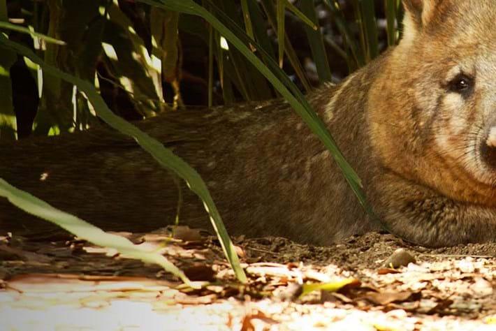 wombat_header_2014_09_18
