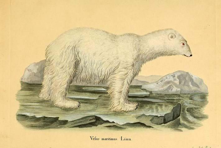 top 10 draw-polar bear-2014-9-22