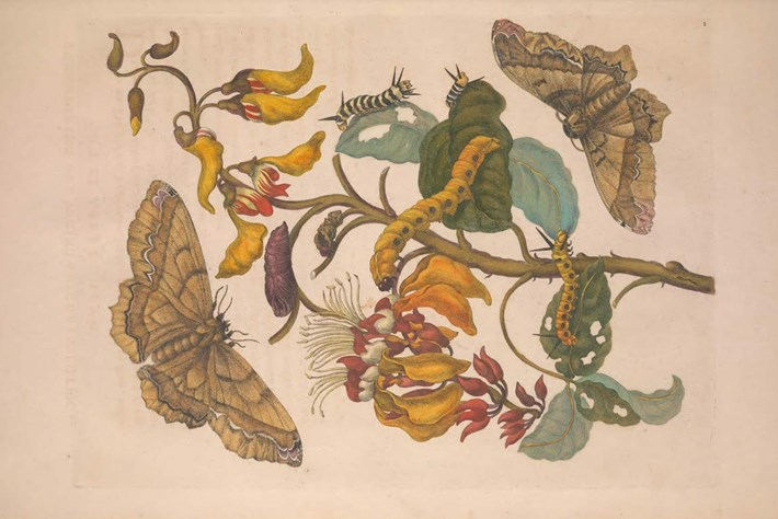 top 10-butterfly-2014-9-22