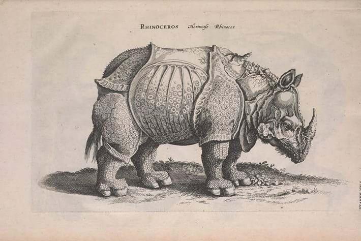 top 10-rhino-2014-9-22