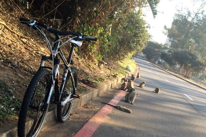 Injured Genet With On Road With Monkeys Bike 2014 09 23