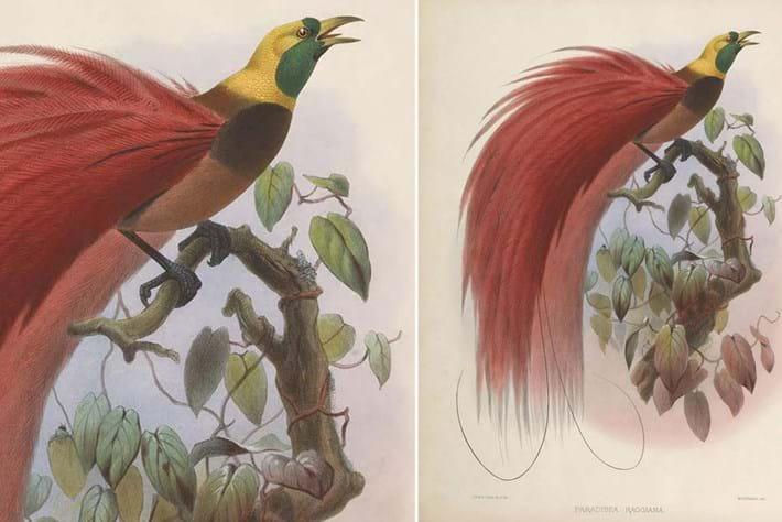 top 10-bird paradise-2014-9-22