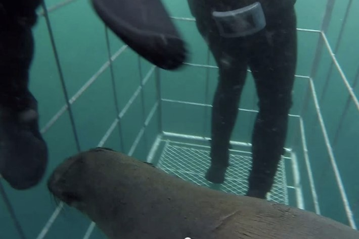 seal cage-page-2014-9-24
