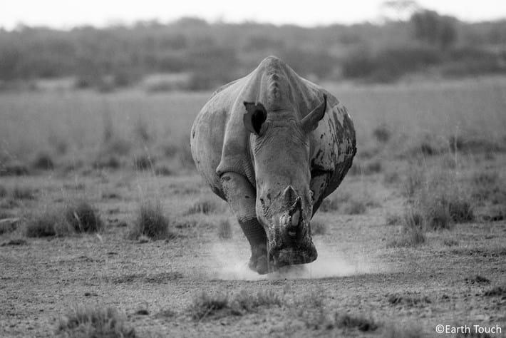 2014 09 25 Rhino Charge
