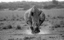Tears and Triumphs: A heartfelt look back at the World Youth Rhino Summit