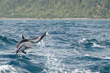 dusky dolphins_New Zealand_2014_09_30