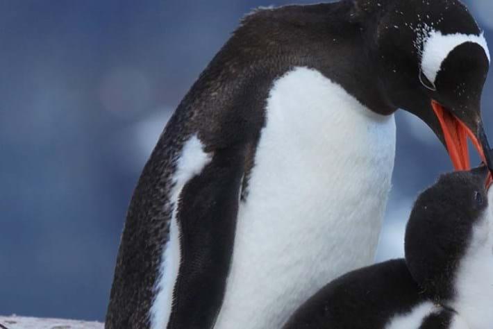 penguins-header-2014-10-1