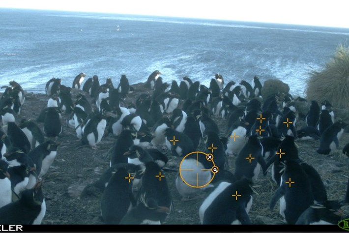 penguin-id game-2014-10-1