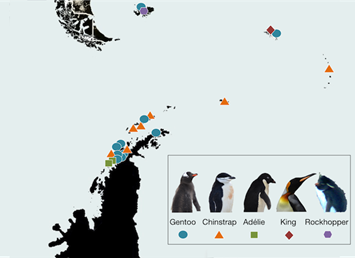 penguins-map of cams-2014-10-1