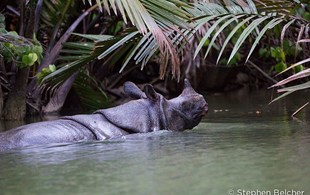 These incredibly rare photos might be your last chance to see a Javan rhino