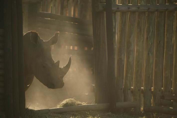 rhino in boma_2014_10_03