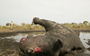 Official stats show rhino poaching at record levels in South Africa – but are the real figures even higher?