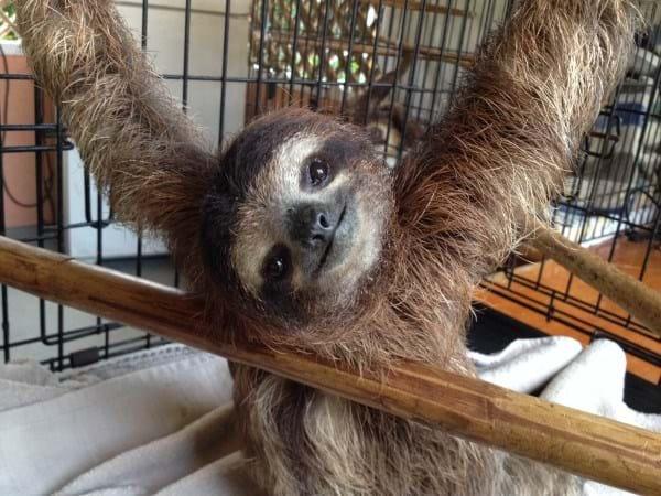 Bojangles Sloth3_2014_10_11