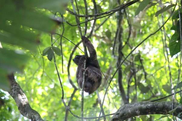 Bojangles Sloth4_2014_10_11