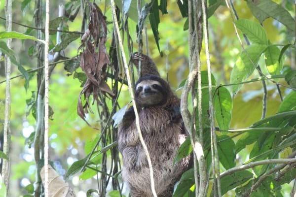 Bojangles Sloth1_2014_10_11