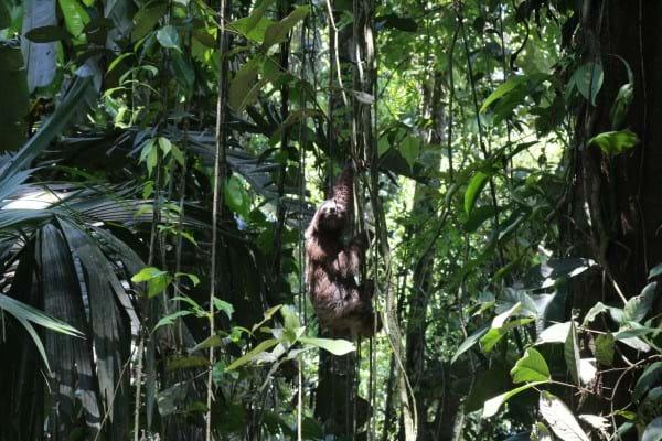 Bojangles Sloth2_2014_10_11