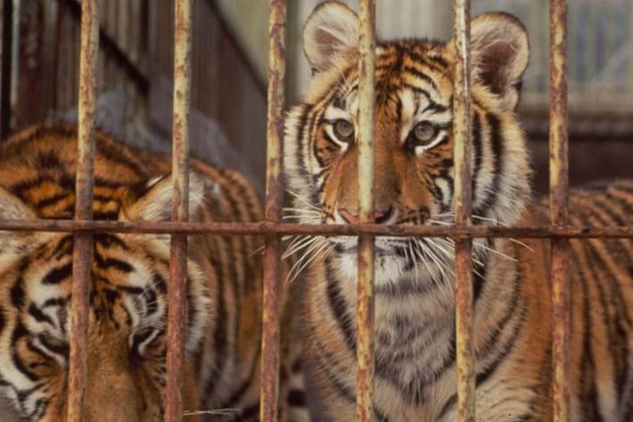 China tiger farm_2014_10_14