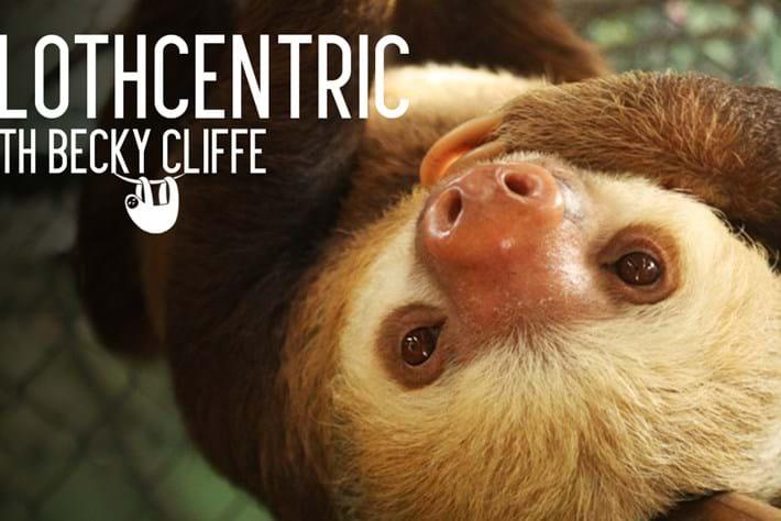 sloth blog_2014_10_15